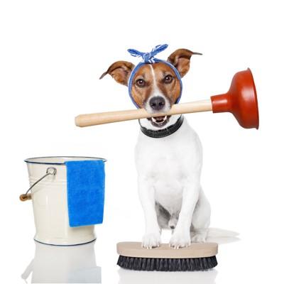 掃除用具を持っている犬