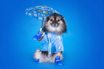青い傘とコートとブーツを着用した犬