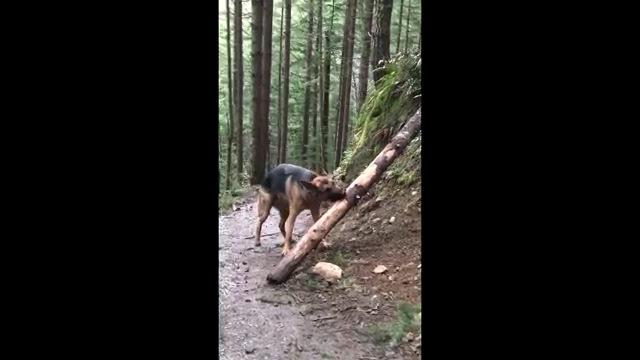 木を咥える犬