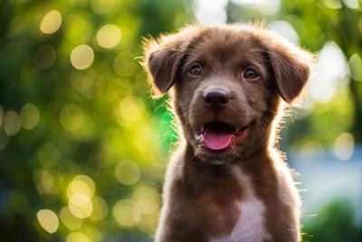 緑をバックに笑う茶色の子犬