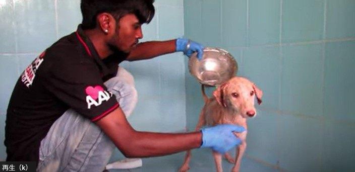 治療を受ける犬