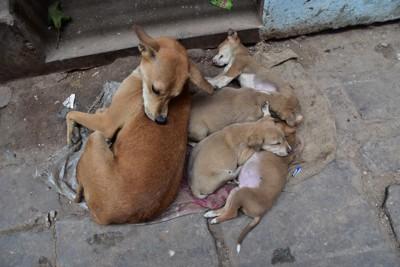 母犬の側で熟睡する子犬