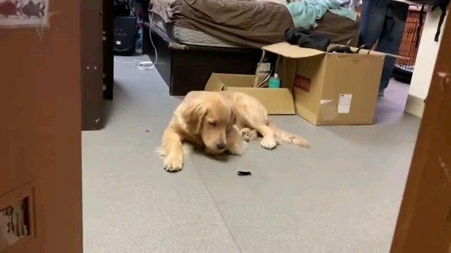 出したものを見る犬