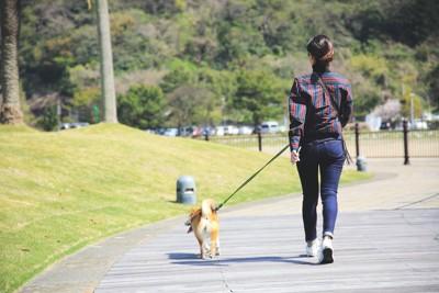 お散歩する柴犬と女性の後ろ姿