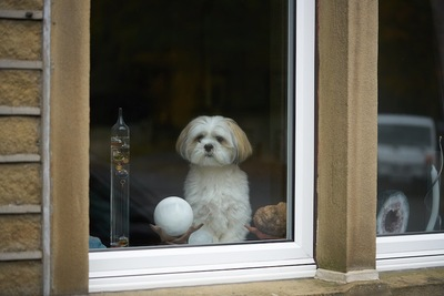 窓辺から外を見るラサアプソ