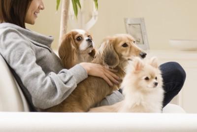 女性とソファーに座る3匹の犬