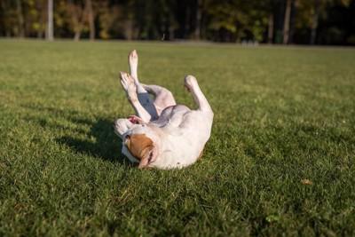 地面に体をこすりつける犬