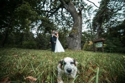 新郎新婦と犬
