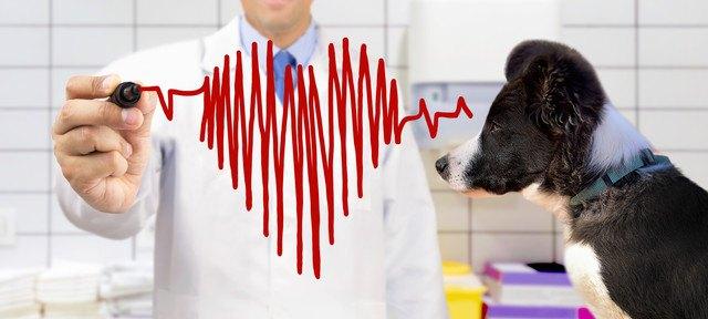 犬の心臓病のイメージ