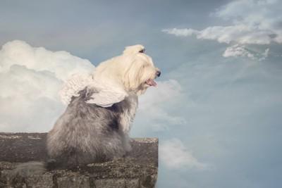 天使の羽を生やした犬