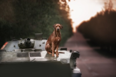 戦車の上に乗る悲しげな茶色い犬