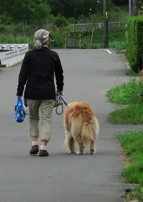 散歩をする犬とおばあちゃん