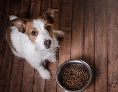 餌を前に見上げる犬