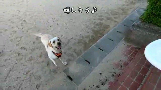 嬉しそう♪~字幕