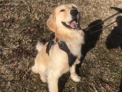 犬はいつも笑顔!