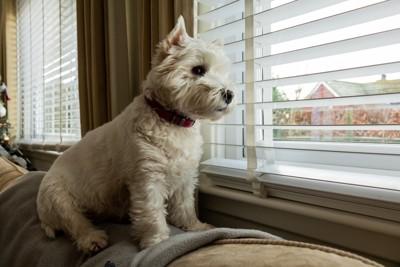 寂しげに外を見る犬