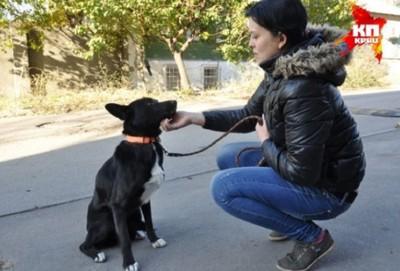 座って向き合う女性と犬