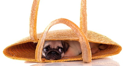 かごにかくれる犬