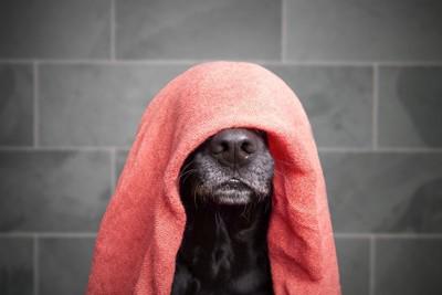 タオルをかぶった犬