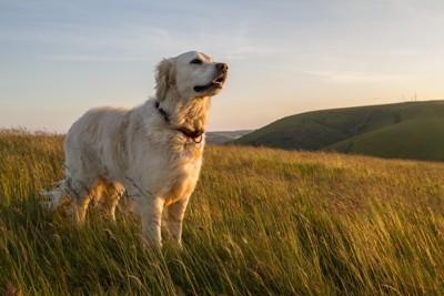 草原に立つ犬