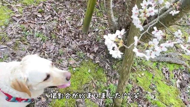 撮影会が~字幕