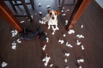 部屋を散らかした犬