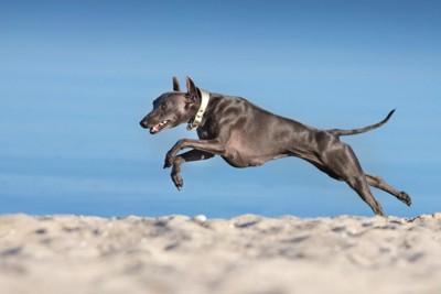 砂の上を走る黒い犬