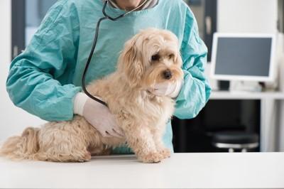 獣医さんに診察される犬
