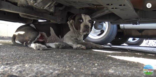 車の下に隠れた犬