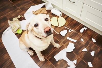 ゴミを散らかしたキッチンに座る犬