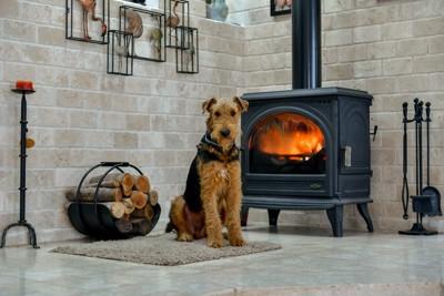 部屋におかれた暖炉の前で座る犬