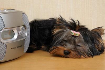 デッキの横で眠る犬