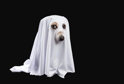 幽霊の扮装をした犬