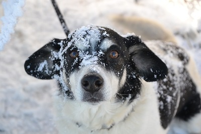 雪をかぶった犬