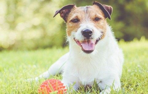 楽しそうにボールを持つ犬