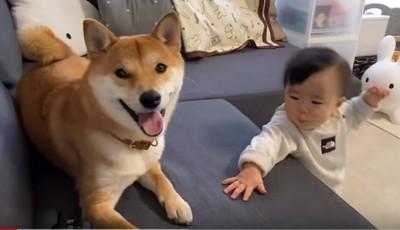 ワンちゃんと赤ちゃん