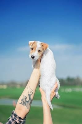 犬のタトゥーが入った人の腕と子犬