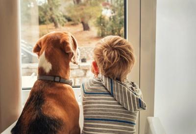 窓の外を眺める犬と男の子の後ろ姿