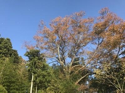 秋に訪れた際の周りの木々の様子
