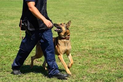 警察犬と訓練士