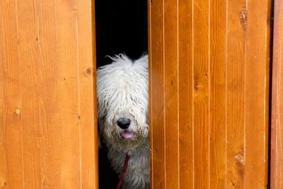 ドアに隠れる犬