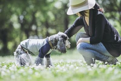飼い主と花畑を散歩する老犬