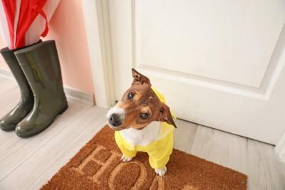 玄関で雨の日の散歩を待つ犬