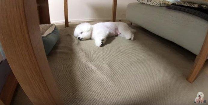 寝転ぶわたまるくん