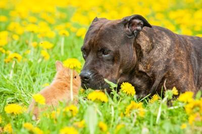 ウサギのにおいを嗅ぐ犬