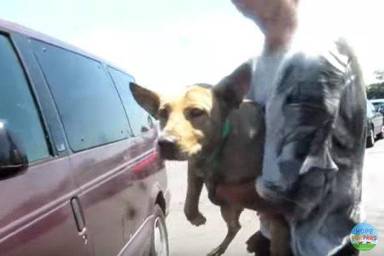 母犬を抱える