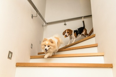 家の階段を駆け下りる二頭の犬