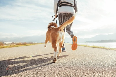 犬とジョギングする女性の後ろ姿