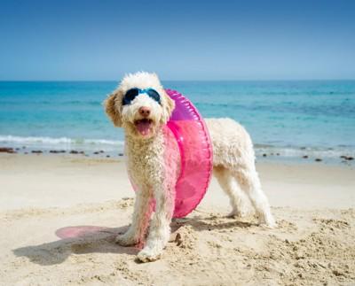 浮き輪を付けた犬