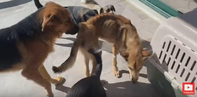 犬仲間とあいさを交わす